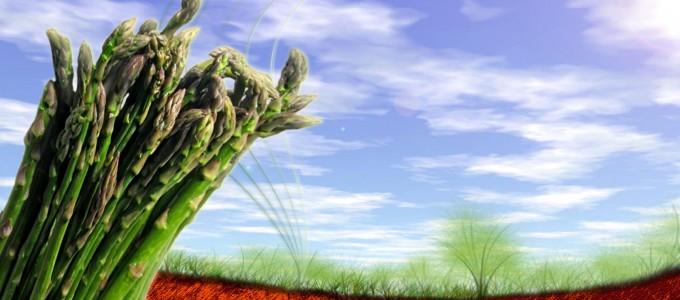 asparagus-1680x1050