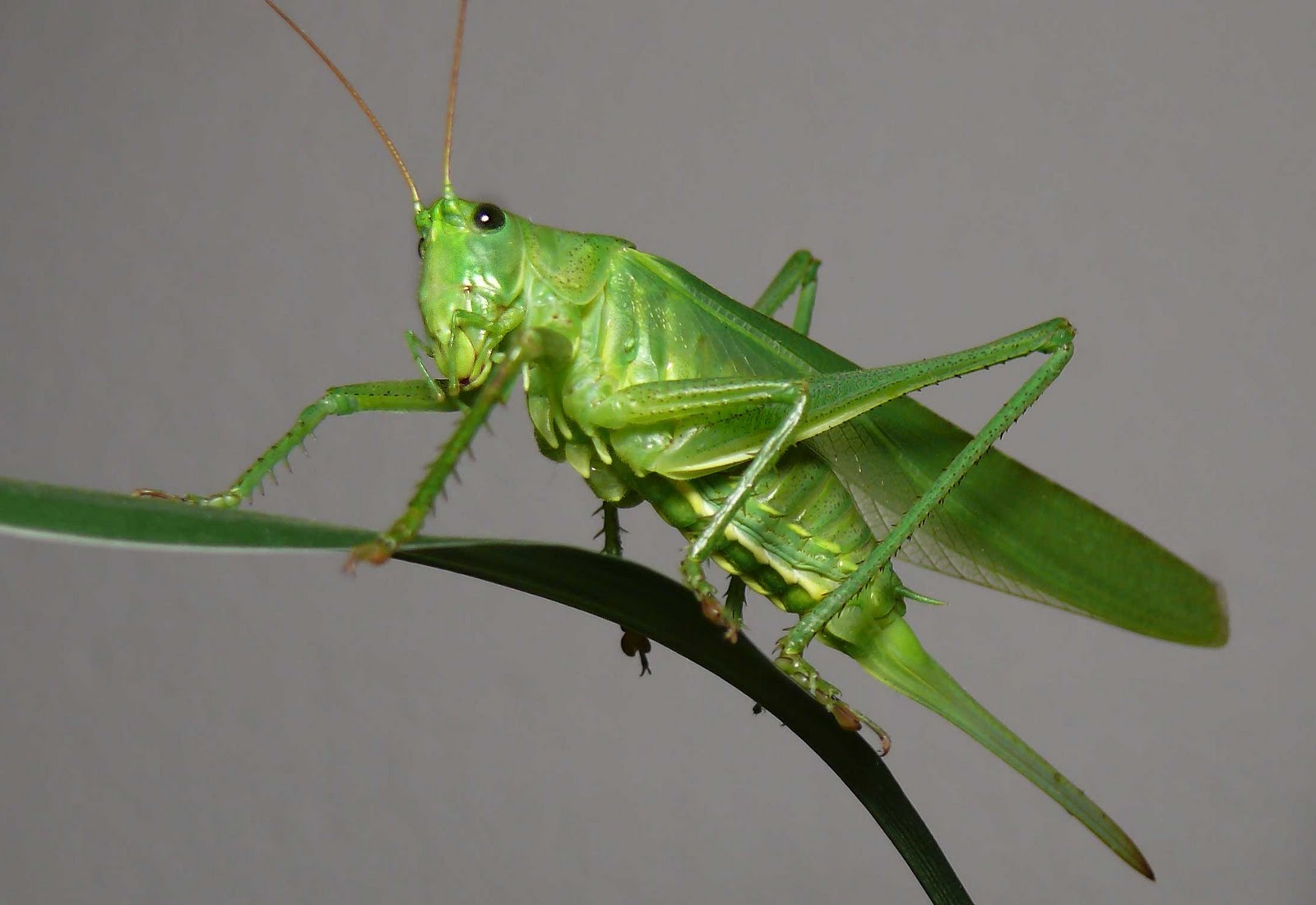 How to Cook Grasshoppers forecasting